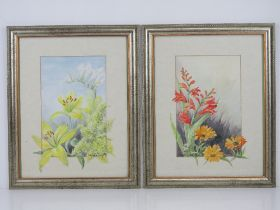 A pair of floral watercolours signed Wanda Sutton being Crocosmia and Gerbera, and Lillies, each