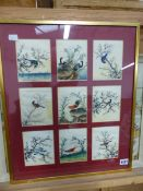 NINE CHINESE WATERCOLOURS OF BIRDS FRAMED AS ONE EACH 12 X 10cms. TOGETHER WITH A HUMOROUS PRINT