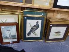 A COLLECTION OF ANTIQUE AND LATER ORNITHOLOGICAL PRINTS AND OTHER BOTANICAL STUDIES.