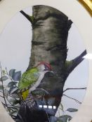 AN OVAL WATERCOLOUR OF A WOODPECKER TOGETHER WITH VARIOUS DECORATIVE PAINTINGS, WATERCOLOURS AND