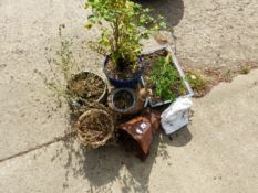 A BONSAI PLANT, VARIOUS PLANT POTS, A RAIN HOPPER, ETC.