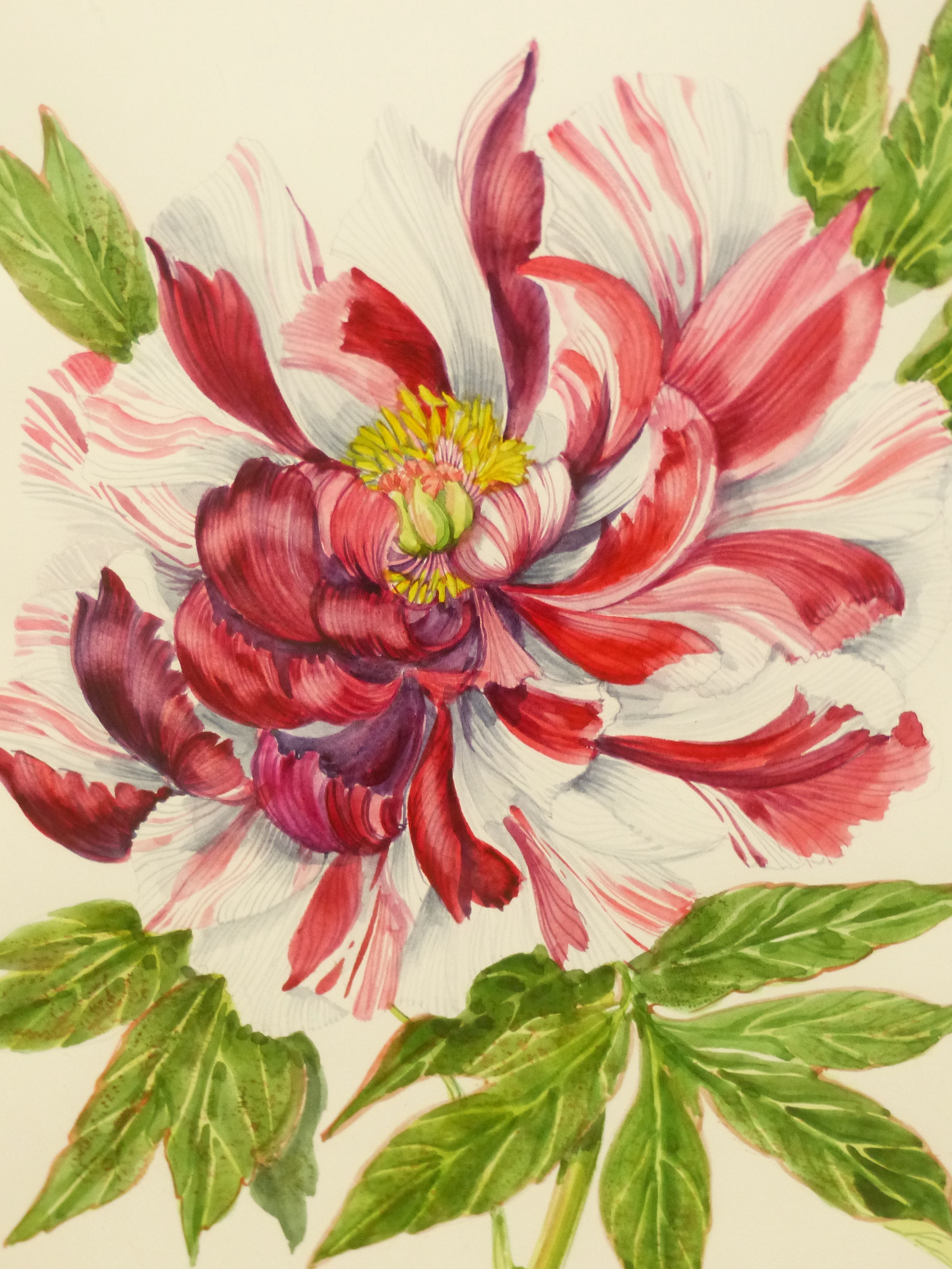 •J. FARVACQUES (20th CENTURY SCHOOL). ARR. THREE BOTANICAL STUDIES, BOTH SIGNED WATERCOLOURS. 36 x