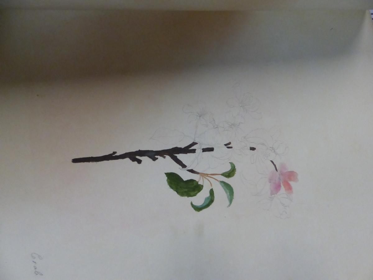A 19th C. ALBUM OF NINETEEN BOTANICAL WATERCOLOURS - Image 2 of 15