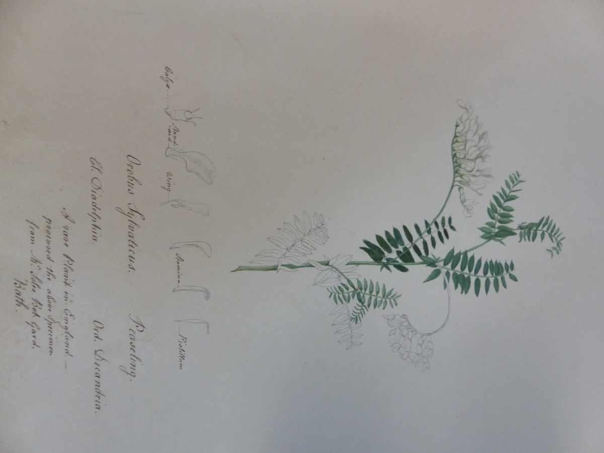 A 19th C. ALBUM OF NINETEEN BOTANICAL WATERCOLOURS - Image 9 of 15