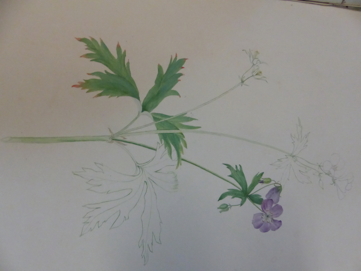 A 19th C. ALBUM OF NINETEEN BOTANICAL WATERCOLOURS - Image 7 of 15