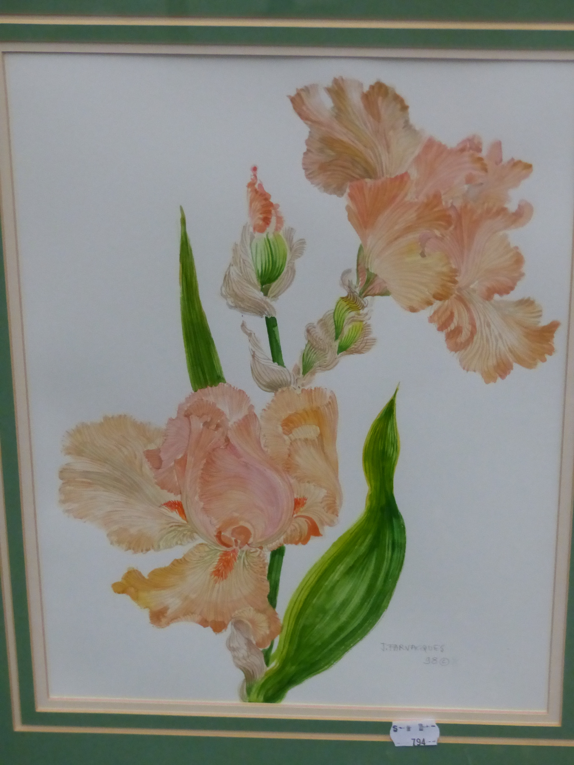•J. FARVACQUES (20th CENTURY SCHOOL). ARR. THREE BOTANICAL STUDIES, BOTH SIGNED WATERCOLOURS. 36 x - Image 4 of 6