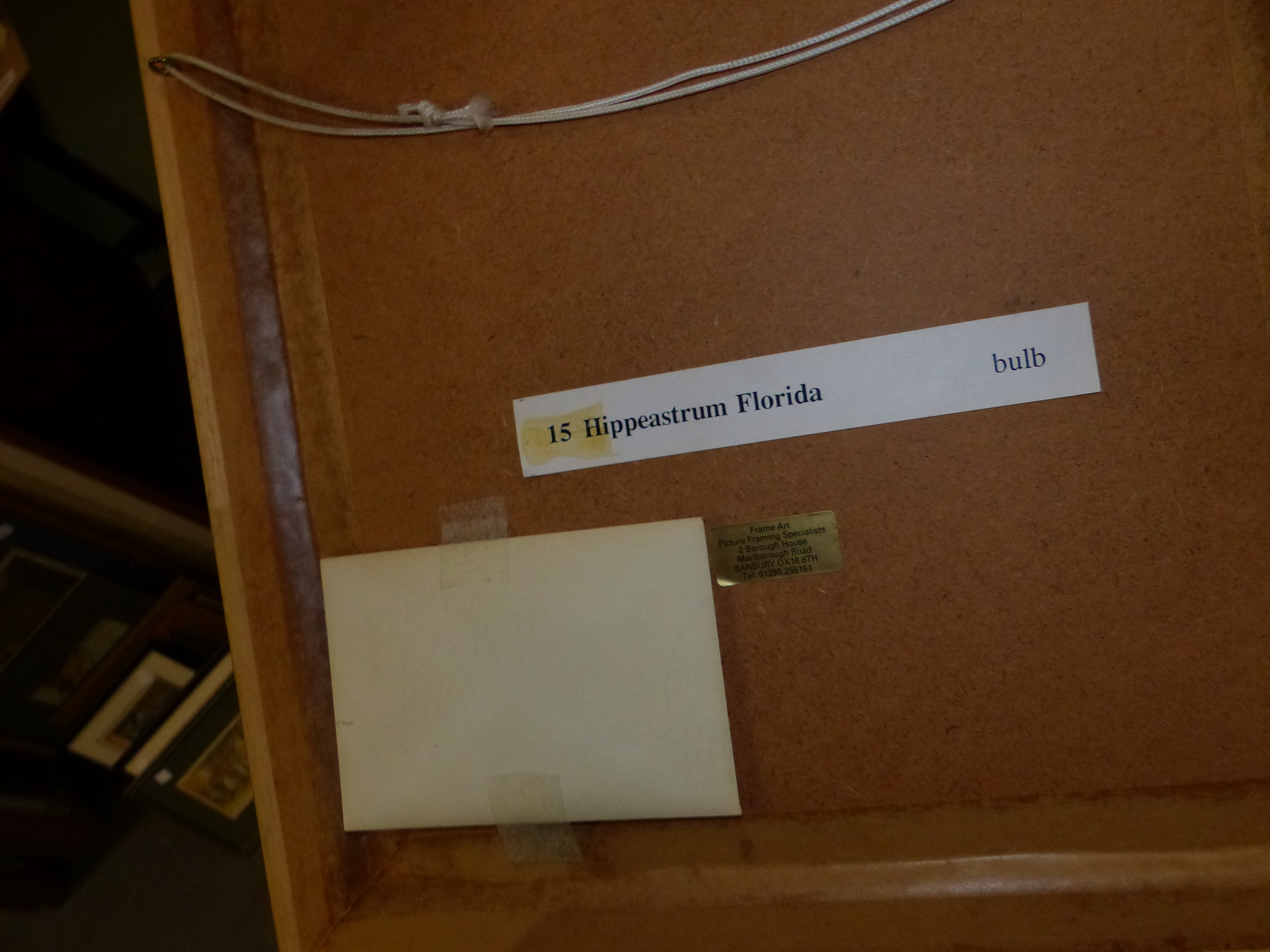 •PAULINE MORRIS (20th CENTURY SCHOOL). ARR. A BOTANICAL STUDY SIGNED WATERCOLOUR 24 x 33 cms, - Image 8 of 8