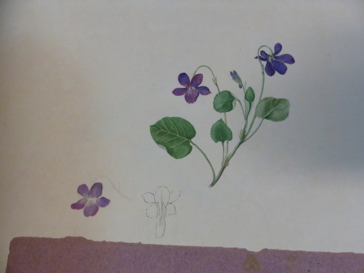 A 19th C. ALBUM OF NINETEEN BOTANICAL WATERCOLOURS - Image 4 of 15