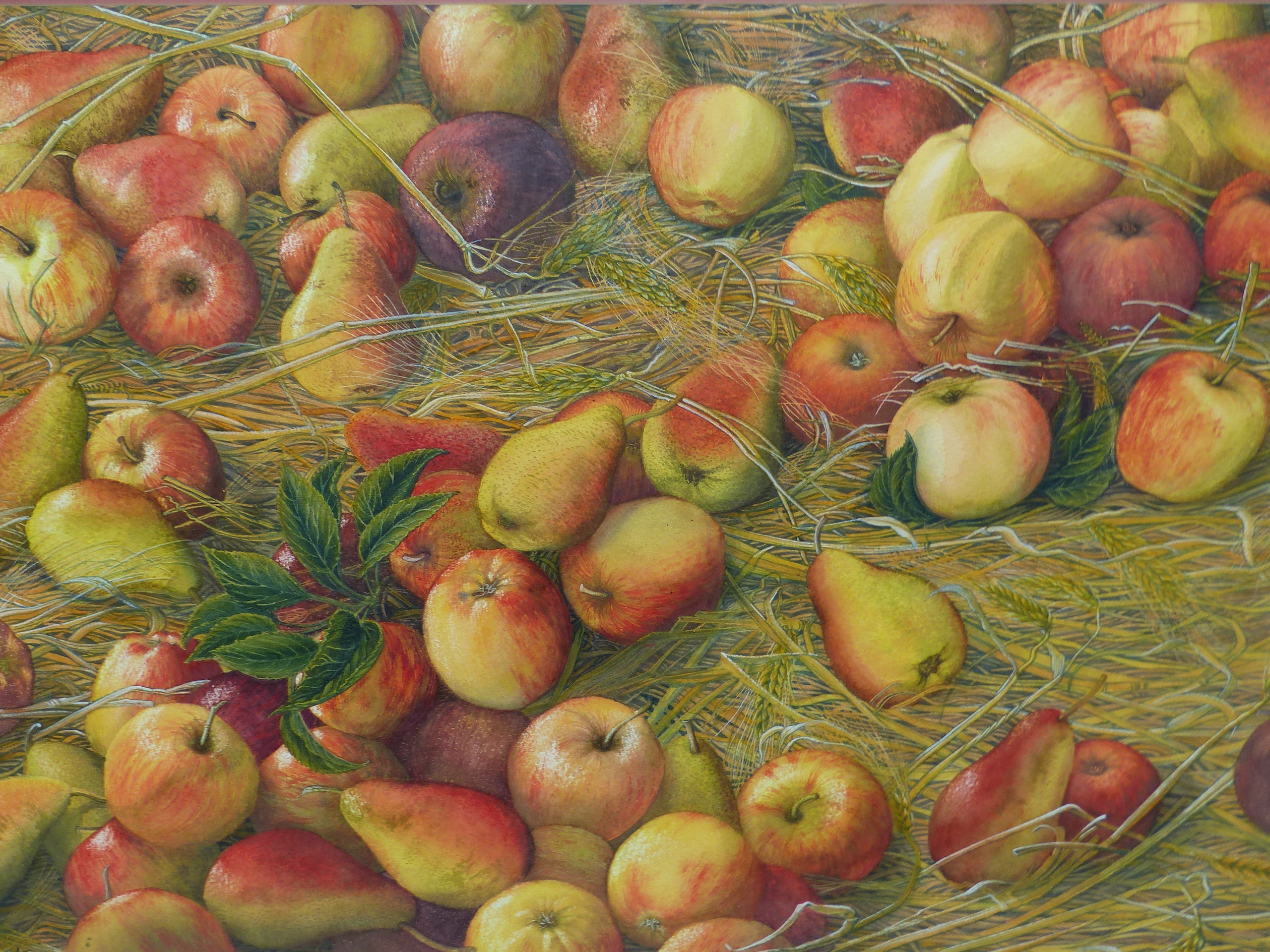 •JOAN LAWRENCE (20th CENTURY SCHOOL). ARR. GALA APPLES AND PACKHAM PEARS, SIGNED WATERCOLOUR, 50 x - Image 2 of 7