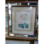 AFTER P.J REDOUTE. THREE ANTIQUE HAND COLOURED PRINTS OF ROSES IN BESPOKE MIRRORED FRAMES, IMAGE