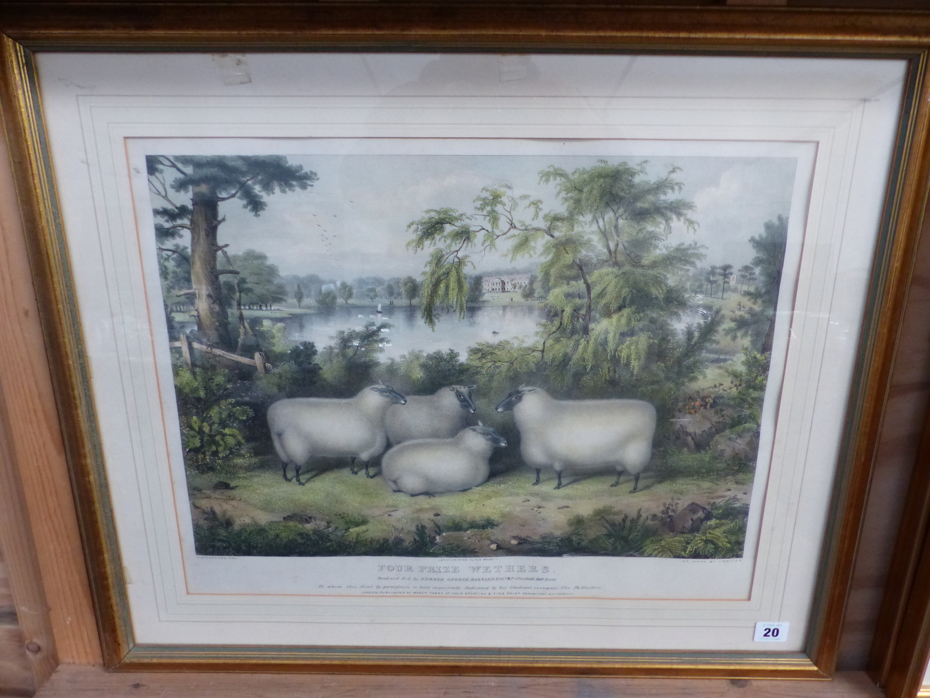 AFTER H. STAFFORD. A HAND COLOURED PRINT OF FOUR SHEEP. 41 x 52cms - Image 2 of 3