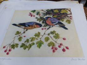 DORIS FOWLES (20th CENTURY SCHOOL) ARR. SIX COLOUR ETCHINGS OF BIRDS. FOUR PENCIL SIGNED UNFRAMED