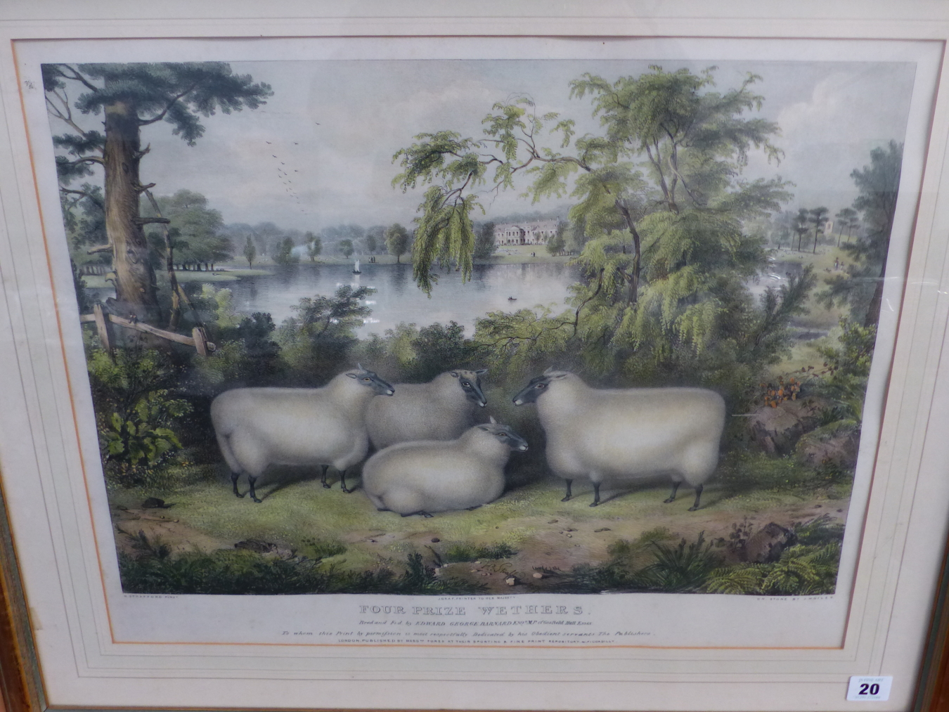 AFTER H. STAFFORD. A HAND COLOURED PRINT OF FOUR SHEEP. 41 x 52cms