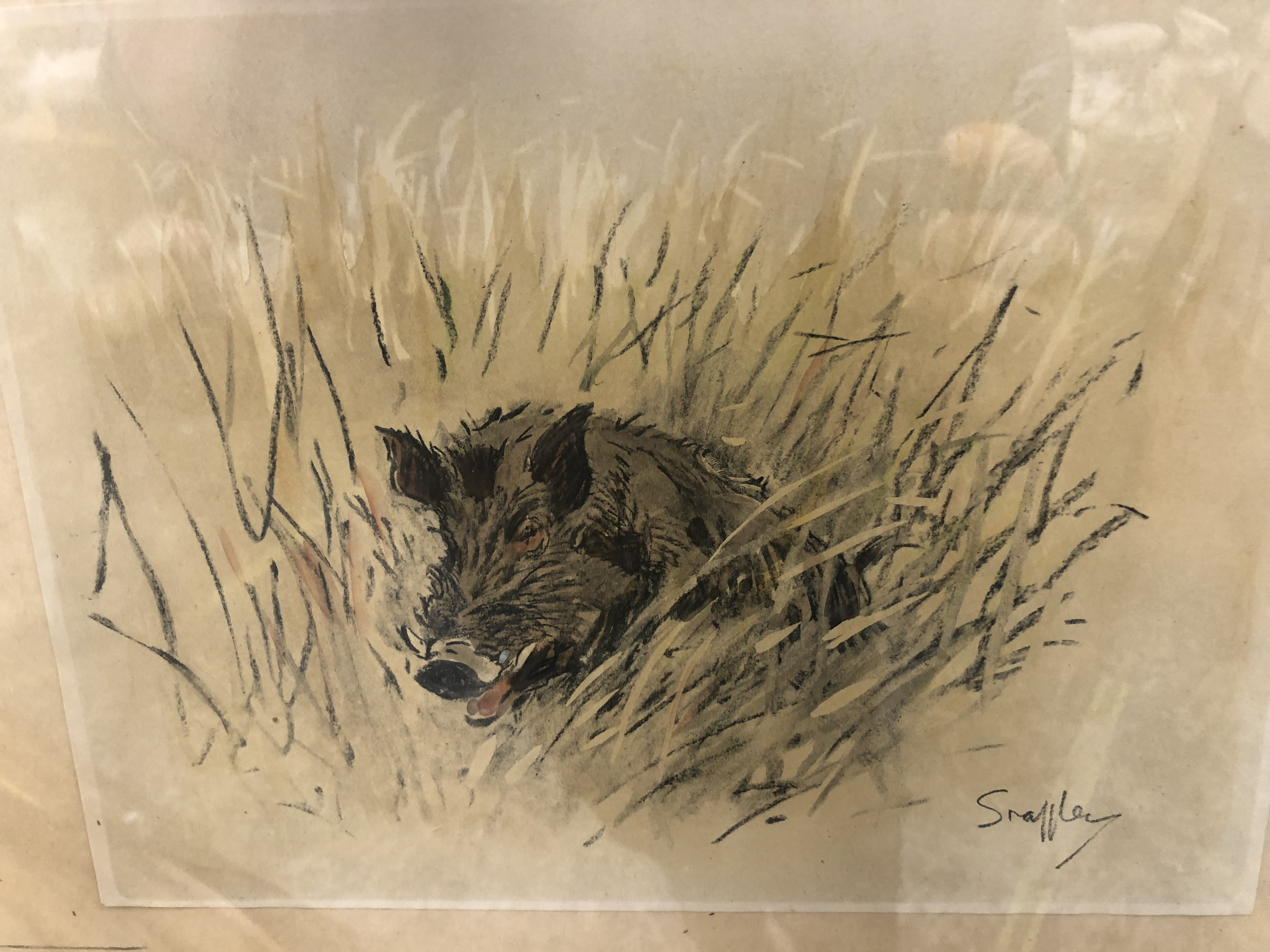 SNAFFLES, CHARLES JOHNSON PAYNE (1884-1967) A PENCIL SIGNED COLOUR PRINT OF A WILD BOAR. 43 x 51cms - Image 7 of 7