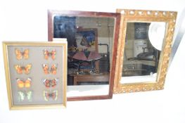 TWO MIRRORS, ONE IN WOODEN FRAME THE OTHER IN GILT FRAME AND COLLECTION OF BUTTERFLIES IN WOODEN