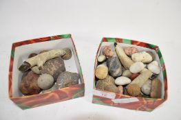 TWO BOXES CONTAINING VARIOUS STONES AND SHELLS