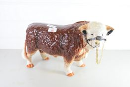 VERY LARGE POTTERY MODEL OF AN ABERDEEN ANGUS BULL WITH METAL NOSE CLIP AND CHAIN
