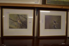 PAIR OF STEPHEN TOWNSEND PHOTOGRAPHIC ORNITHOLOGICAL PRINTS, EACH SIGNED IN PENCIL AND NUMBERED TO