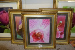 SELECTION OF FRAMED PHOTOGRAPHIC FLORAL PRINTS