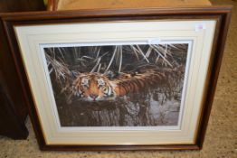 LARGE FRAMED STEPHEN TOWNSEND PHOTOGRAPHIC PRINT - TIGER, NUMBERED IN PENCIL, FRAMED WIDTH APPROX