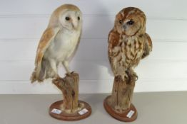 PAIR OF STUFFED OWLS