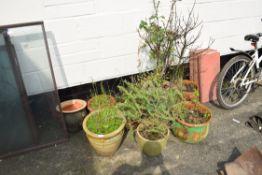 Qty large plant pots including contents