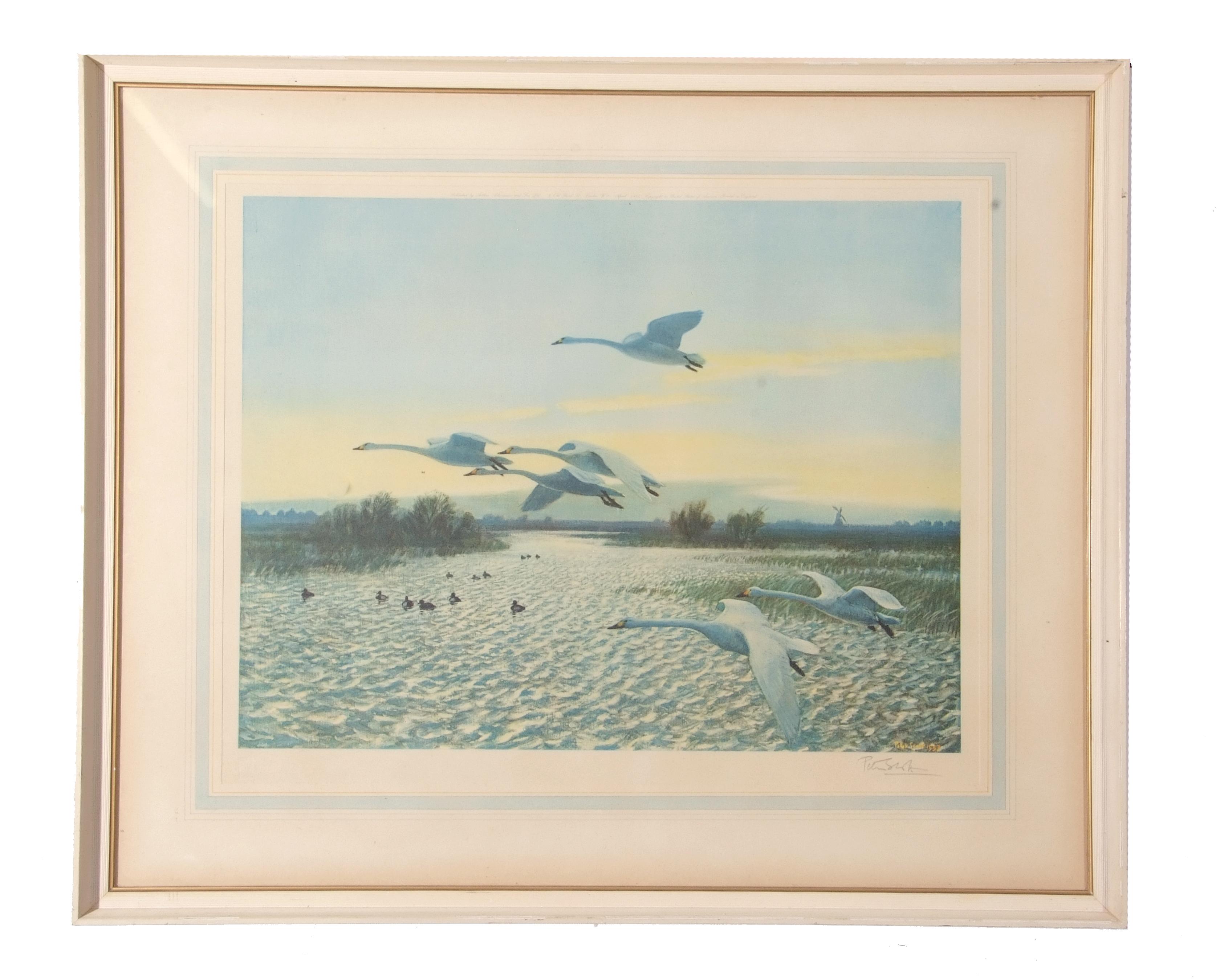 Peter Markham Scott, print, signed inn pencil to margin, Swans in Flight, 44 x 52cm