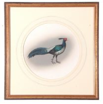 """J C Harrison, Watercoulour, Pheasant Study """"Nepal Kalij"""", produced for the book """"Pheasants of the"""