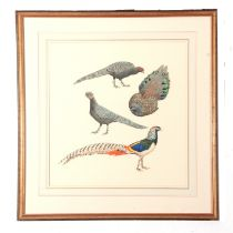"""J C Harrison, Watercoulour, four Pheasant Studies (single frame), produced for the book """"Pheasants"""