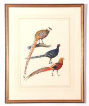 """J C Harrison, Watercoulour, three Pheasant Studies (single frame), produced for the book """""""