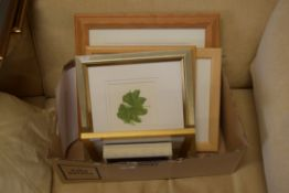 BOX CONTAINING VARIOUS BOTANICAL WATERCOLOURS BY SUSAN DALTON SBA TOGETHER WITH FURTHER ONE BY K