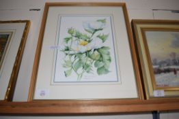 WENDY BROWNE, STUDY CALIFORNIAN POPPIES, 21 X 29CM, FRAMED AND GLAZED