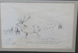 Attributed to Sir Alfred Munnings (British 20C) A study of a stag in profile . Pencil on arches,