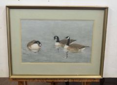 M Cargill (British 20C), A gaggle of Canadian Geese. Watercolour, signed. Approx 10x16 inches.