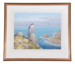 Richard Robjent (British 20C), Peregrine Falcon perched on a sea cliff, watercolour heightened