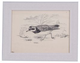 A H Patterson (British, 19th century), A common ringed plover, Breydon, Great Yarmouth, pencil,