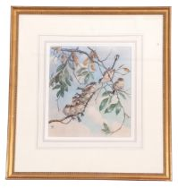 Winifred Austen (British, 19th century), Banditry of long-tailed tits in a tree, watercolour,