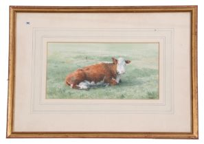 M Webb (British, 20th century), A portrait of a prized Hereford, watercolour, signed, 1982, 5 x
