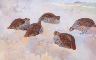 Frank Southgate (British, 19th century), A bevy of English Grey Partridges, watercolour, signed,