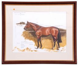 Michael Jeffery (New Zealand /British 20C), German Thoroughbred racehorse 'Shirocco', Oil, pencil