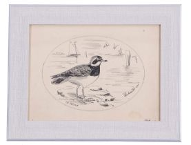 A H Patterson (British, 19th century), A study of a common ringed plover, pencil, pen on paper,
