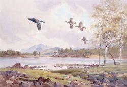 Ornithology, Wildlife & Sporting Art