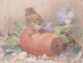 Winifred Austen (British, 19th century), A Young Robin, watercolour, signed, 11 x 11ins
