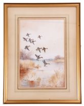 Roland Green (British 20C), A coil of Teal in flight,Watercolour laid on paper, signed, 17 x 12ins