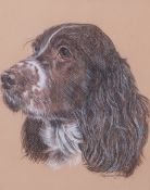 Pauline Henry (British 20th Century) Head of a Spaniel, pastel, signed, 7.5 x 9.5ins