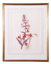 Barbara Shaw (British Contemporary) Floral Still Life - Cardinal Flowers, watercolour, signed with