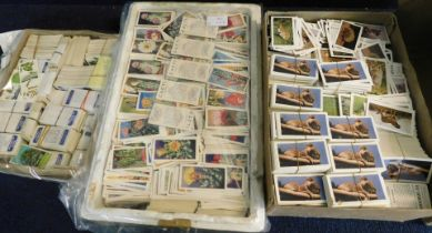 Three boxes: good quantity three duplicated sets of trade cards, Brooke Bond 1966 Trees in