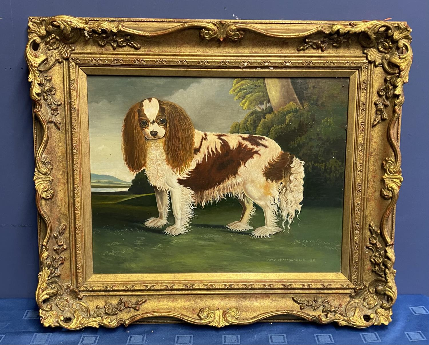 C20th oil on board, study of a King Charles Spaniel, signed and dated John McCorquodale 88, 40 x