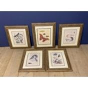 Set of 5 framed and glazed coloured prints depicting butterflies. Condition - faded