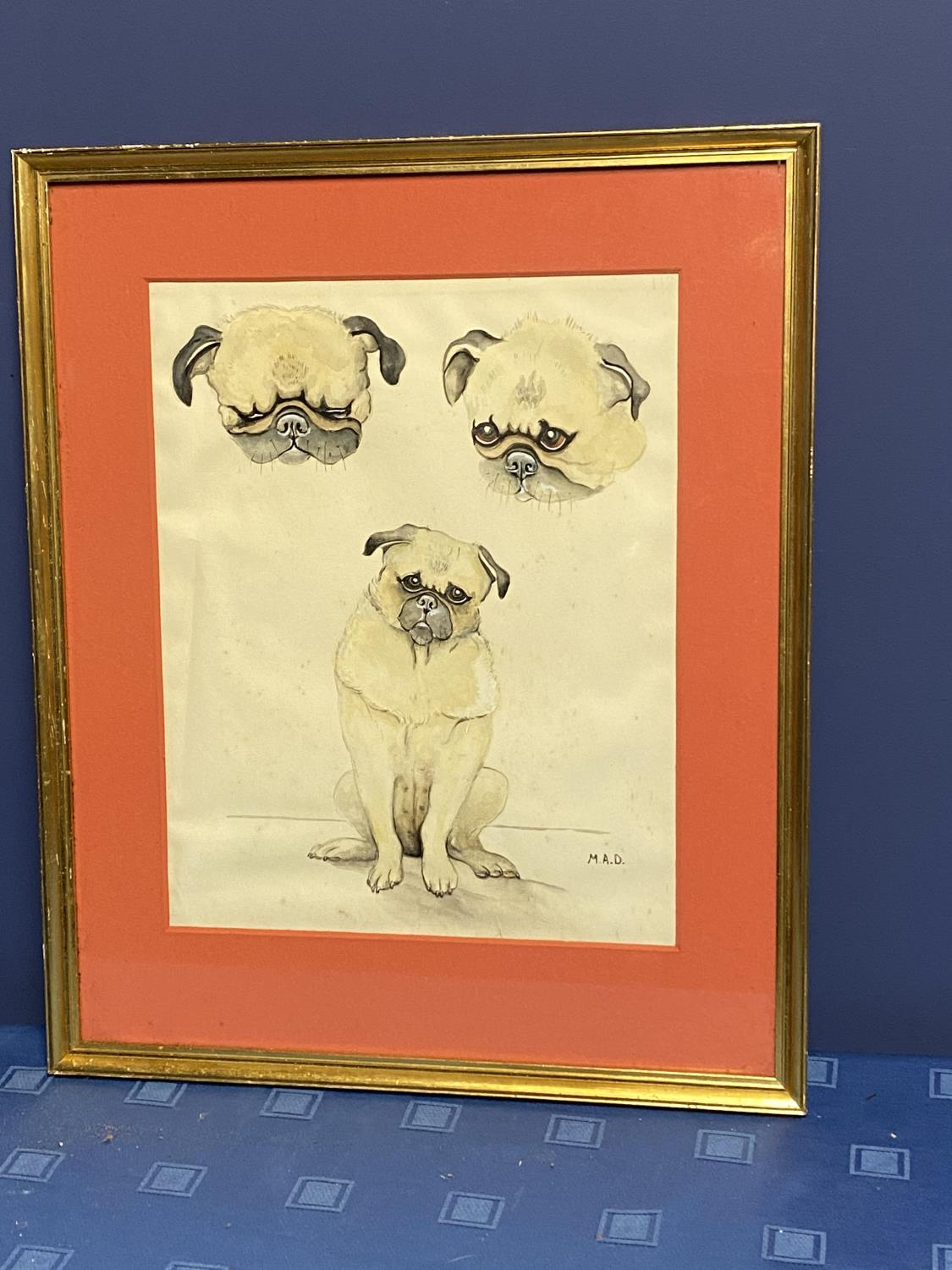 Framed and glazed ink & pencil/mixed media study of Pug dogs, signed lower right MAD, overall size